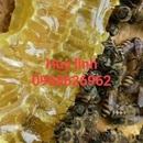 Mật ong hoa sú vẹt